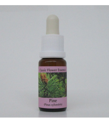 Pin sylvestre/Pine