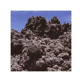 Lichen Stereocaulon Vesuvianum