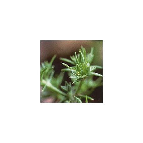 Alène/Scleranthus*