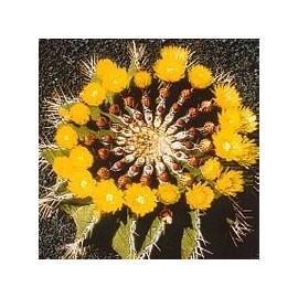 Ferocactus Schwarzii* (Self - Esteem Cactus) élixir 15ml